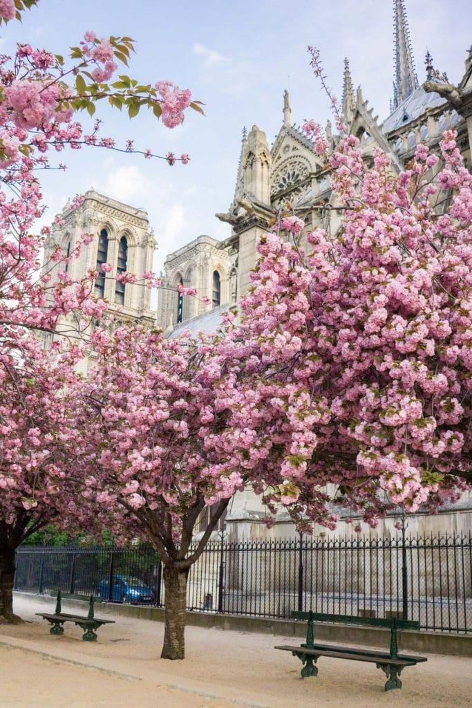 floraison Paris